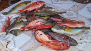 Ryby z tržiště
