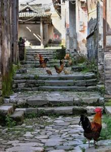 Xiong Cun - Ráj domácího zvířectva