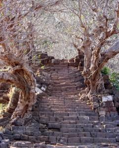 Klenba kouzelných stromů