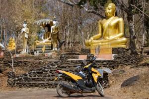 Buddhové v lesíku